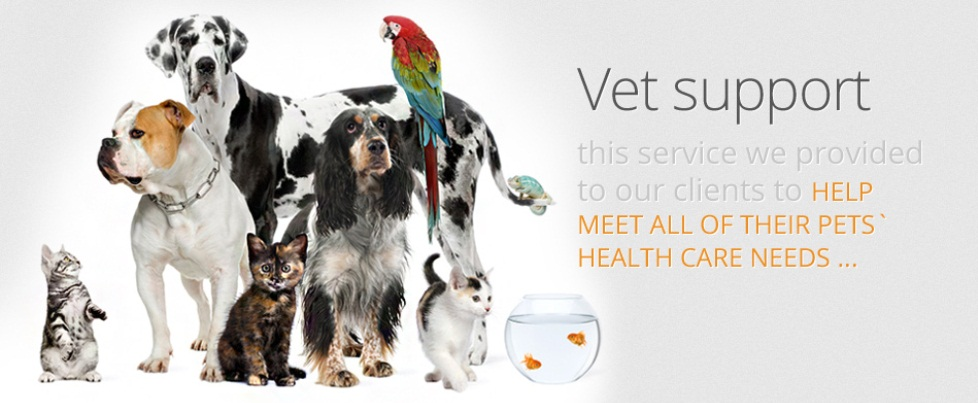 Vet support meeting all your pets health care needs