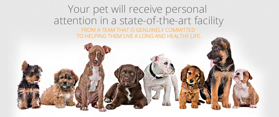 Your pet will receive personal attention in a state-of-the-art facility